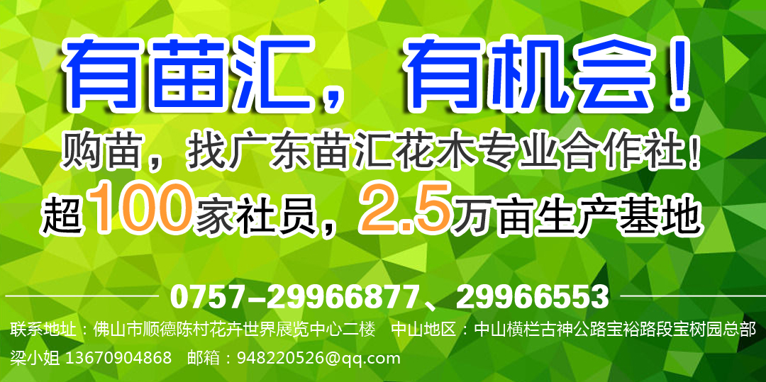 广东苗汇花木专业合作社