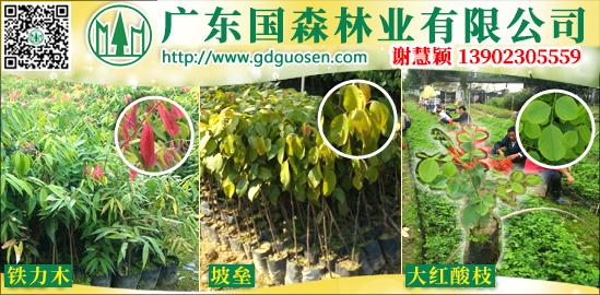 广东国森林业有限公司