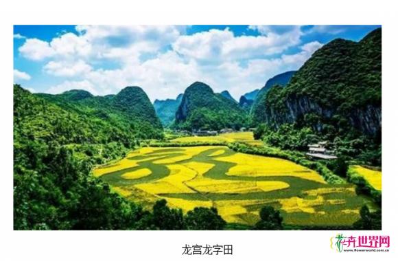 世界最大植物汉字景观获权威认证